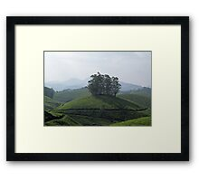 Trees in Tea  Framed Print