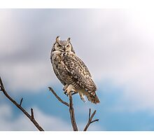 Great Horned Owl on a stick Photographic Print