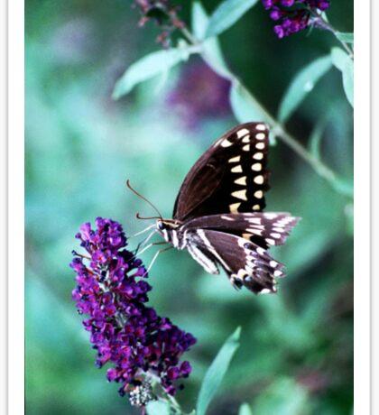 Nectar Connoissuer  Sticker