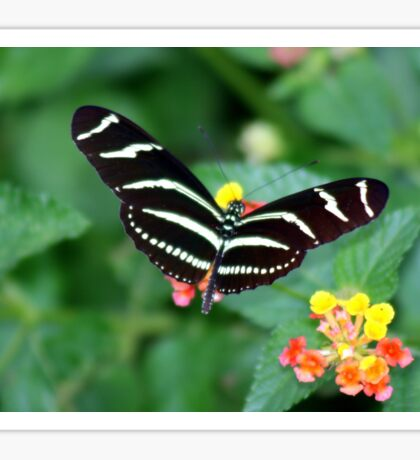 Zebra Longwing Sticker