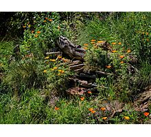 California native garden Photographic Print