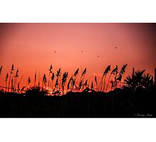 Dragonflies Over Dune Grass Photographic Print