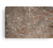 Autumn grass with raindrops Canvas Print