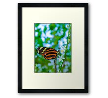 Orange & Black Butterfly White Flowers Framed Print