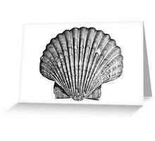 Black and White Seashell Greeting Card