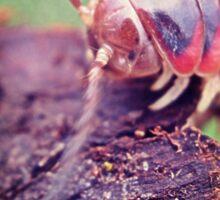 millipede 3 Sticker