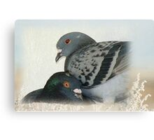 Lovers - Love for Pigeons Canvas Print