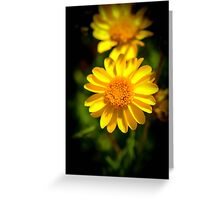 Yellow Flower Black Background Greeting Card