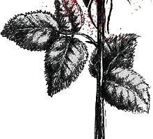 Rose by Bijan-Gh