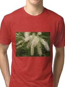 Buckinghamia blossoms Tri-blend T-Shirt