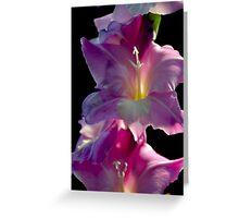 Pink gladiola flowers Greeting Card