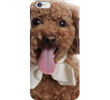 Cute poodle with ribbon iPhone Case/Skin