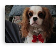 Dog for the Holidays Canvas Print