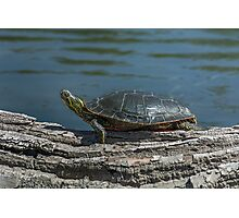 Painted Turtle Photographic Print