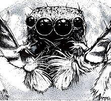 Tarantula -  Along Came a Spider by richard b. hamer