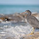 Heron by Scott Carr