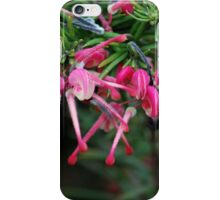 Grevillea of Tiny Flowers iPhone Case/Skin