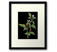 Chilly plant Framed Print