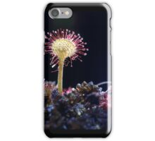 Droséra Flower  beauty ! by Olao-Olavia par Okaio Création and Studio Portable Okaio and 2 Flashs  iPhone Case/Skin