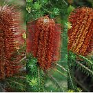 Banksia Collage by Lozzar Flowers & Art