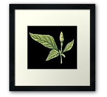 Chilly plant- green fruits Framed Print