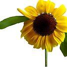 Golden Sunflower by Susan Savad