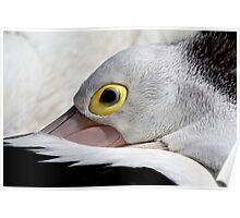 Pelican I Poster