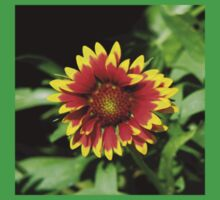 Gaillardia (Blanket Flower) Close-up  Kids Clothes