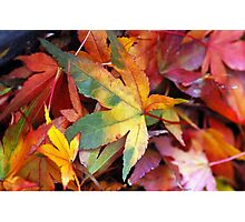 Colorful autumn leaves Photographic Print