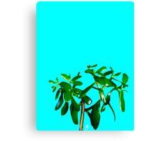 Good Luck Succulent Tree on Sky Blue Canvas Print