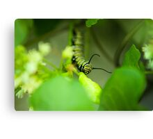 A Morning Snack Canvas Print