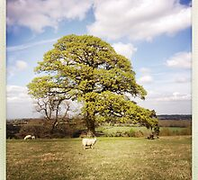Sheep Tree by Thierry Vincent