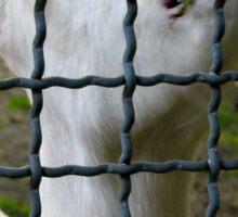 Cute goat wants out Sticker