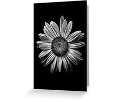 Backyard Flowers In Black And White 13 Greeting Card