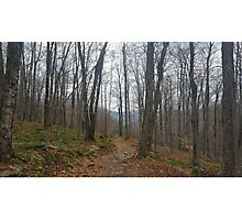 Trail Among the Catskill Mountains New York Photographic Print
