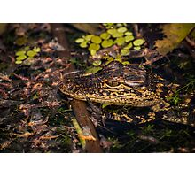 Gator baby and may flyers Photographic Print