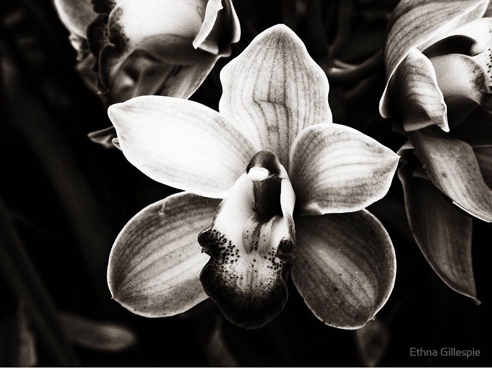 Orchid  by Ethna Gillespie