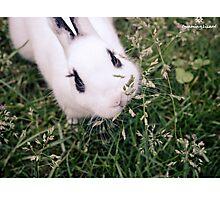 Rabbit Munching on Tasty Grass Photographic Print