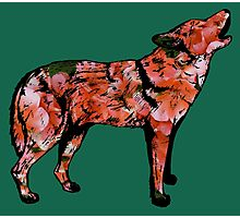 Howling Wolf with Salmon Pink Geraniums Photographic Print
