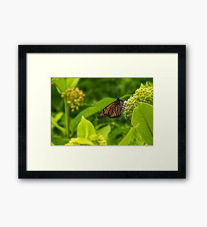 Beautiful Bright Monarch Butterfly Flower Framed Print