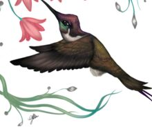 Hummingbird Coloured Version Sticker