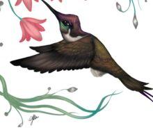 Hummingbird Coloured Version Sticker