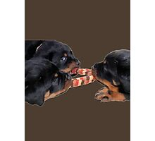 Loving and Sharing Rottweiler Puppies Photographic Print