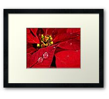 Sparkling poinsettias Framed Print