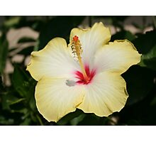 Yellow Hibiscus With Garden Background Photographic Print