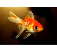 Goldfish Photographic Print