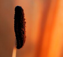 Lily stamen and pollen by Karen  Betts