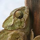Close Up Of A Wild Green Chameleon by taiche