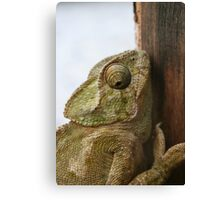 Close Up Of A Wild Green Chameleon Canvas Print