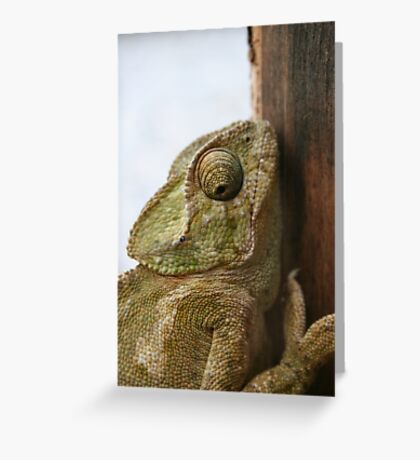 Close Up Of A Wild Green Chameleon Greeting Card